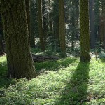 biomassa_ok